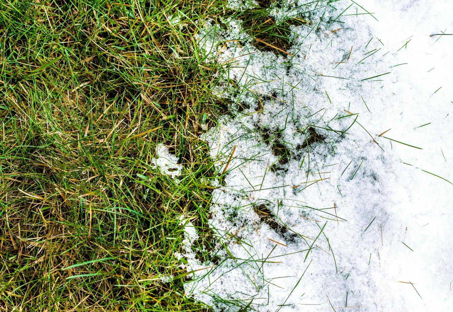 How to repair your lawn after the winter