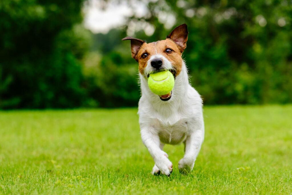 Dog on a lawn