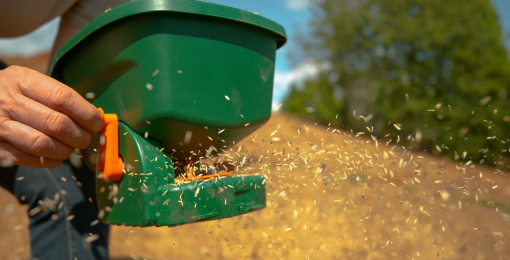 Sowing grass seed with spreader