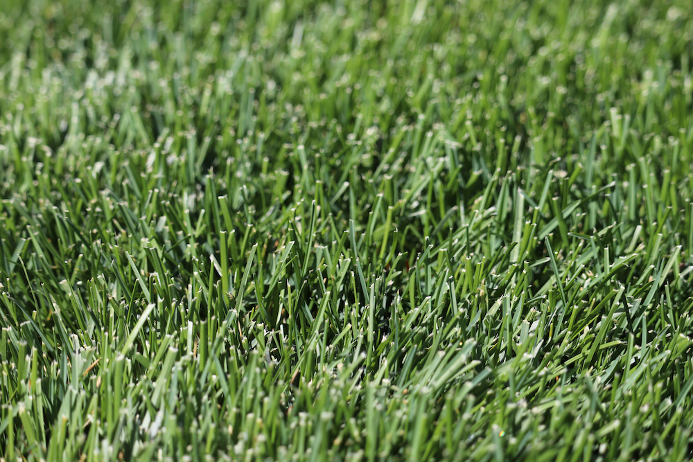 Is Your Grass Type Right for your Garden?