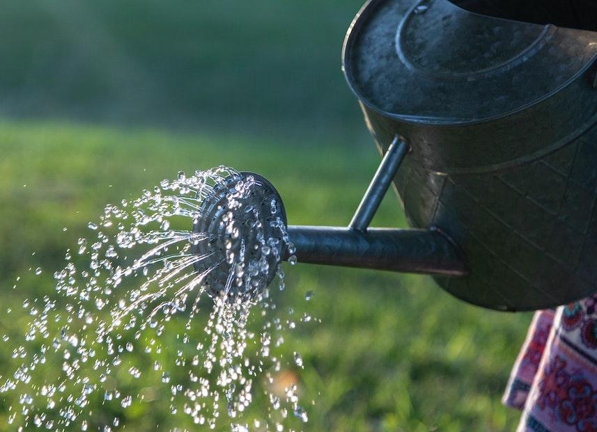 Watering Your Garden: 10 Top Tips!