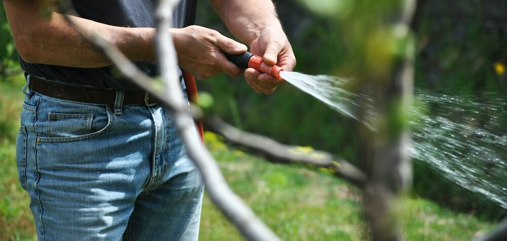 This is how to keep your lawn in shape this summer