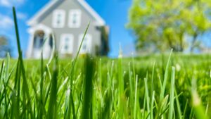 Long grass with a house in the background.