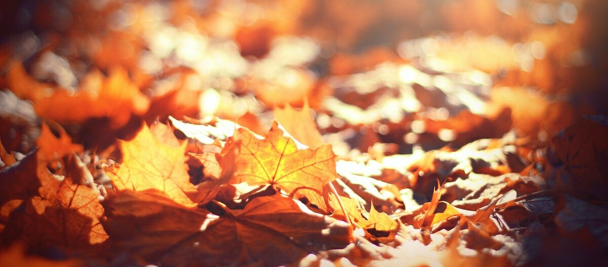 Leafmould: How to Turn Fallen Leaves into Gardener's Gold